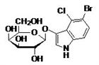 β-半乳糖苷酶的底物 X-Gal
