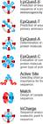 抗原表位预测软件EpiQuest™